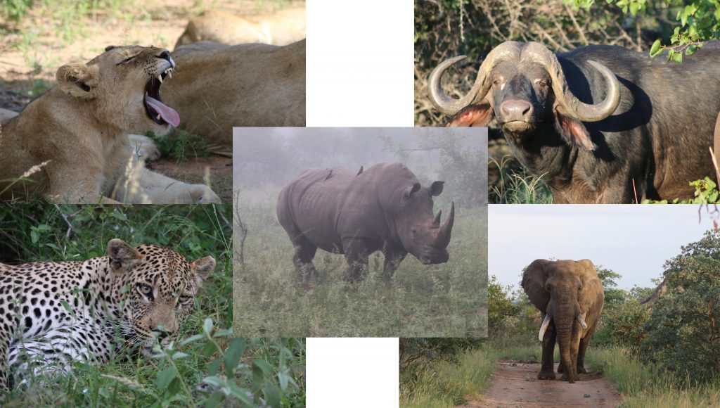 collage of Lions, Rhino, Cape Buffalo, Leopard and Elephant