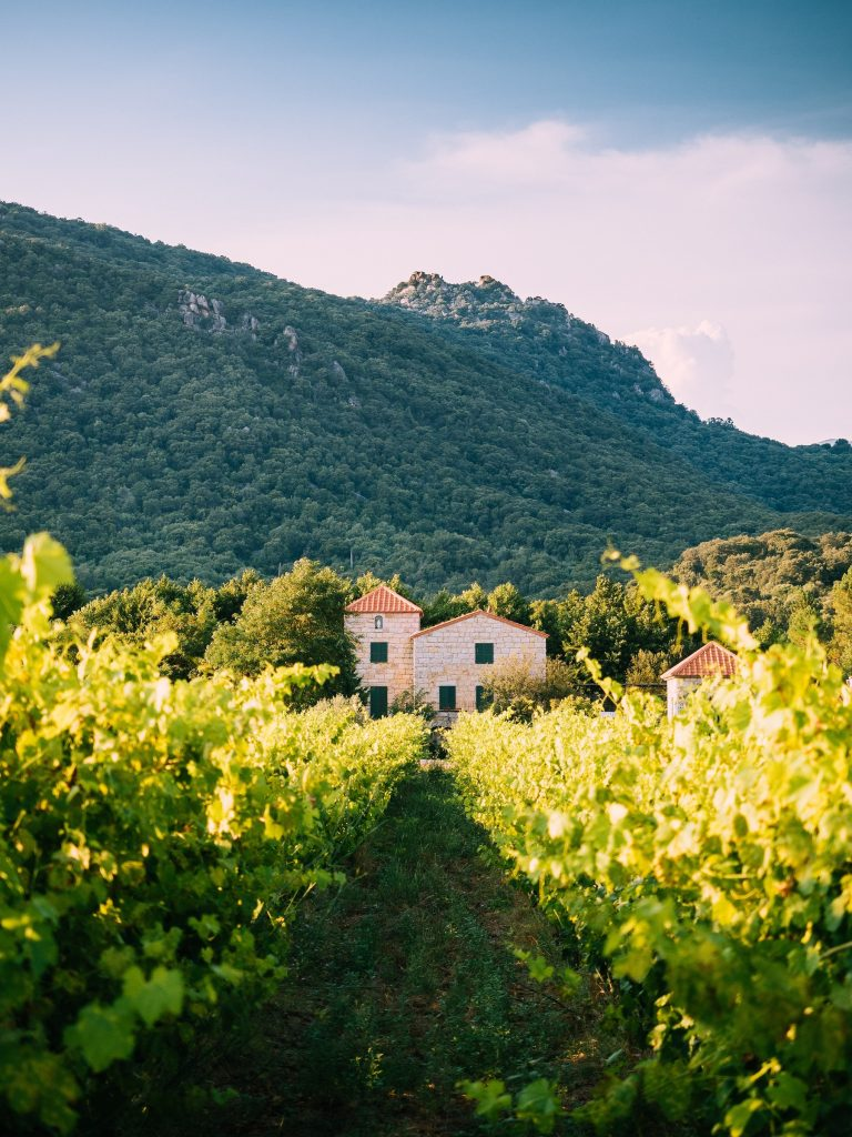 Pretty landscape with Vineyard